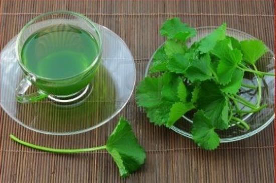 Tác dụng của cây rau má cho sức khỏe nhiều người chưa biết